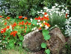 Расставляем акценты в саду