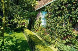 Декоративный сад. Изгородь из цветов