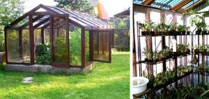 Теплица. Растения под стеклом